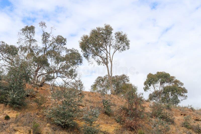 Przyglądający up treed bulwar w kierunku błękitnego chmurnego nieba obraz stock