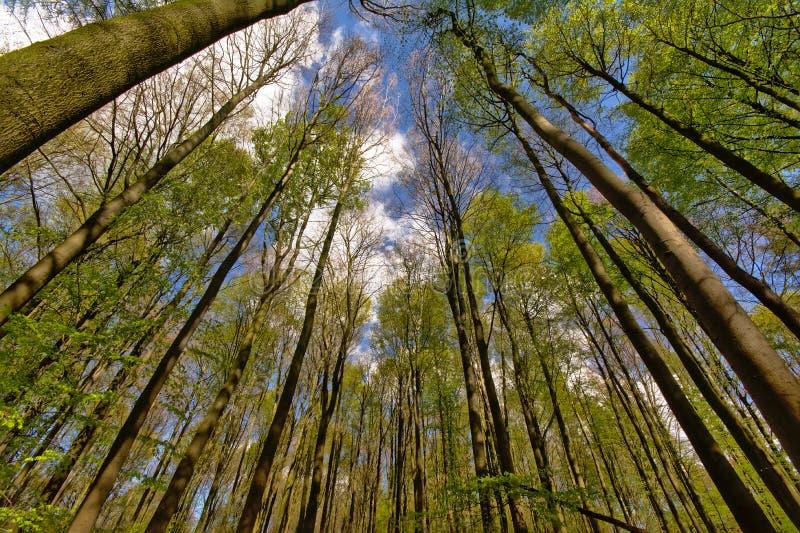 Przyglądający up w drzewa obrazy royalty free