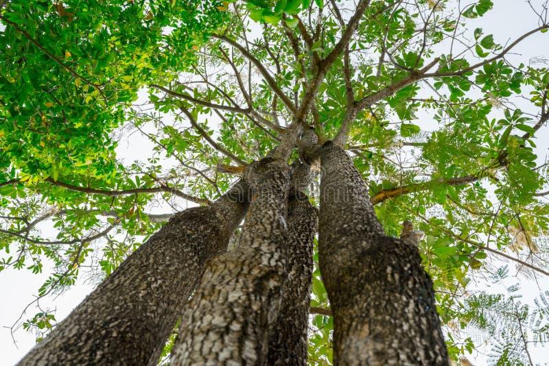 Przyglądający up w lesie obrazy royalty free