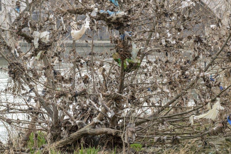 Przygnębiający plastikowy drzewo obraz royalty free