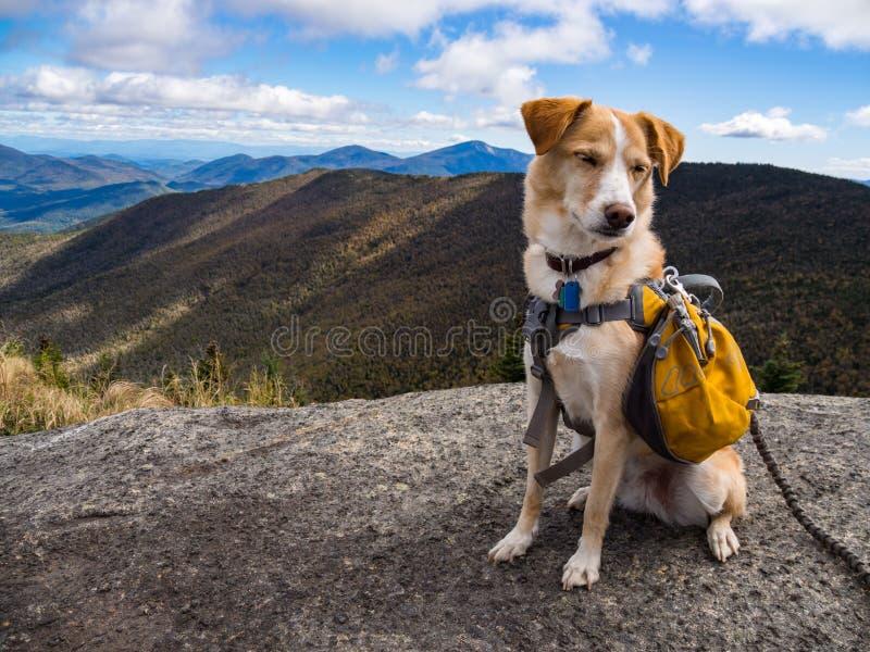 Przygoda pies z Żółtym plecakiem na Halnym szczycie fotografia royalty free