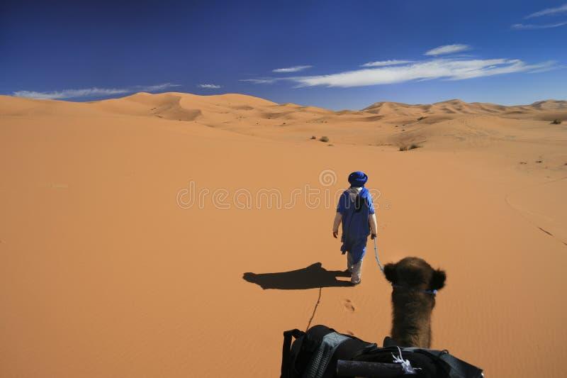 przygody wielbłąda pustynia szeroka zdjęcie royalty free