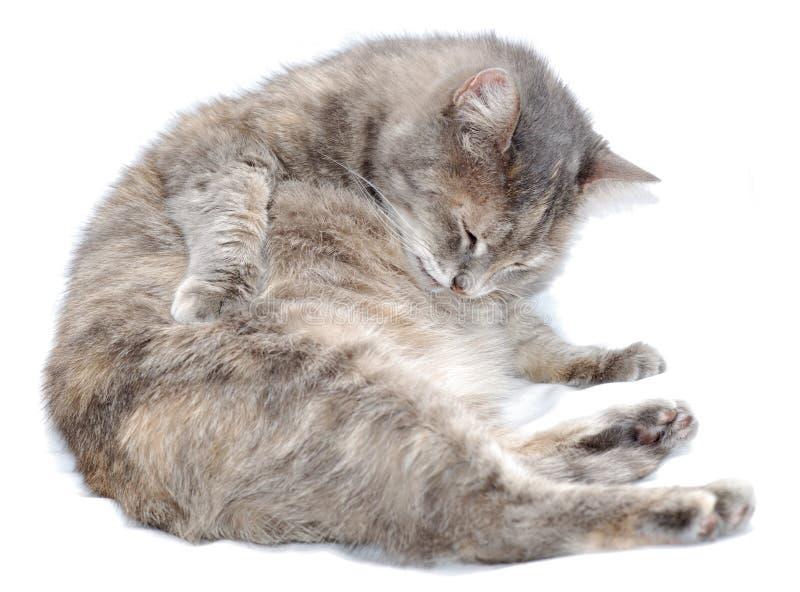 przygotować kota zdjęcia royalty free