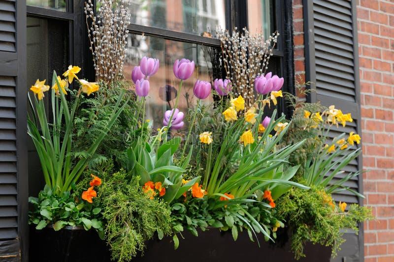przygotowania pudełka kwiatu okno obrazy stock