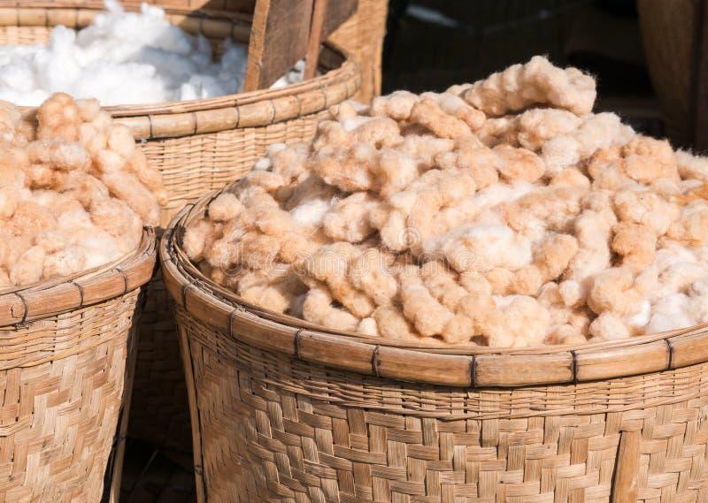 Przygotowanie bawełna dla tkanych linii obrazy stock