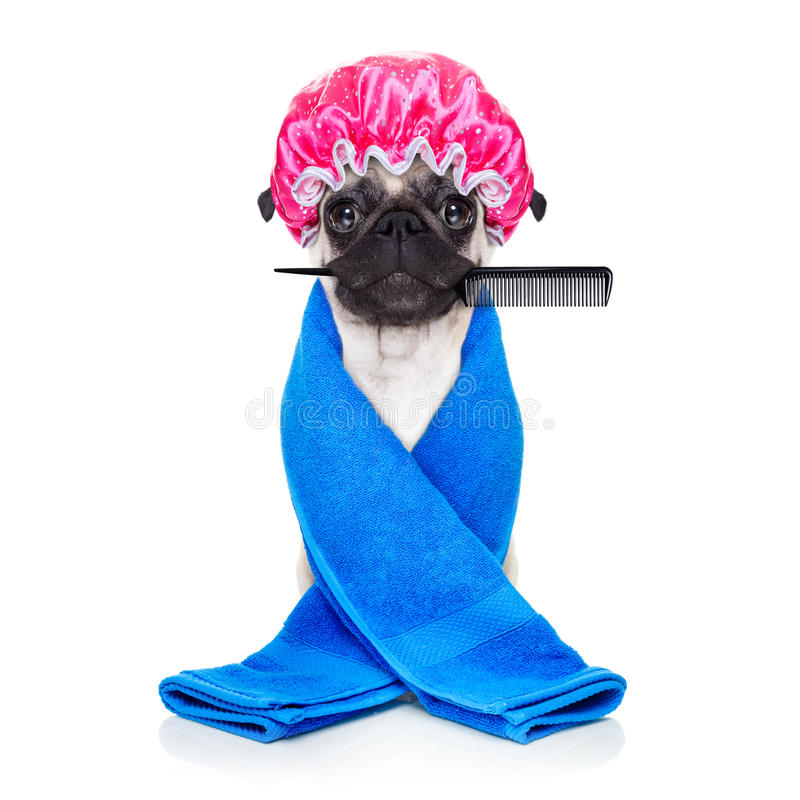 Przygotowywać psa obraz stock