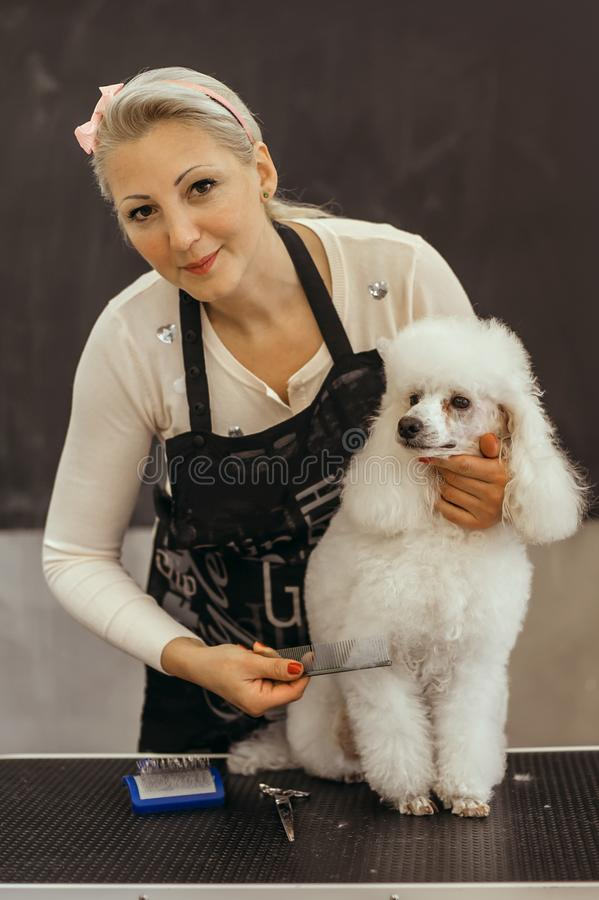 Przygotowywać troszkę psa w włosianym salonie dla psów zdjęcie stock