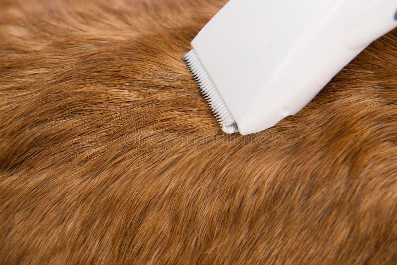 przygotowywać usługa Zamyka up pies dostaje jego włosy ciący przy gr obrazy stock