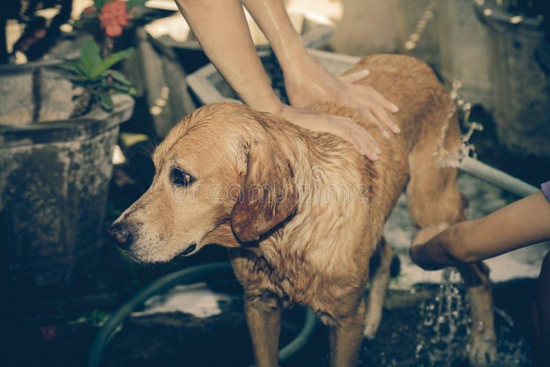 przygotowywający kąpielowy pies bierze zdjęcia stock