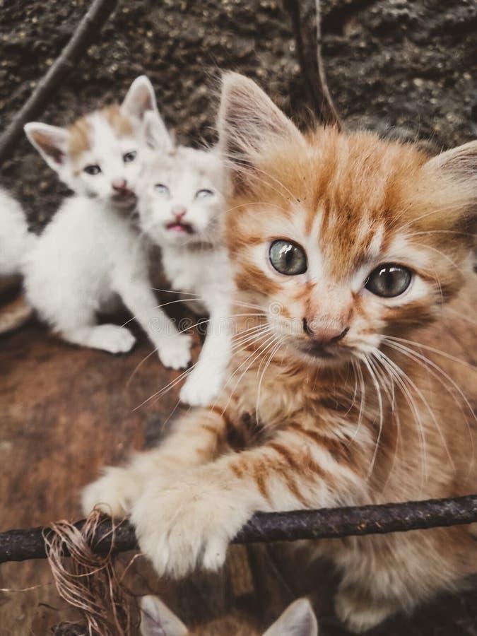 Przyjaciół koty zdjęcia royalty free