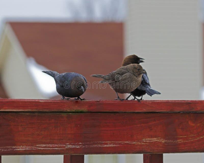 przyjaciele ptaka zdjęcia royalty free