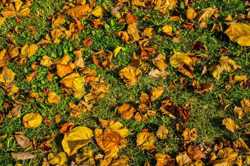 Przyjazd jesień susi liście na gazonie zdjęcia royalty free