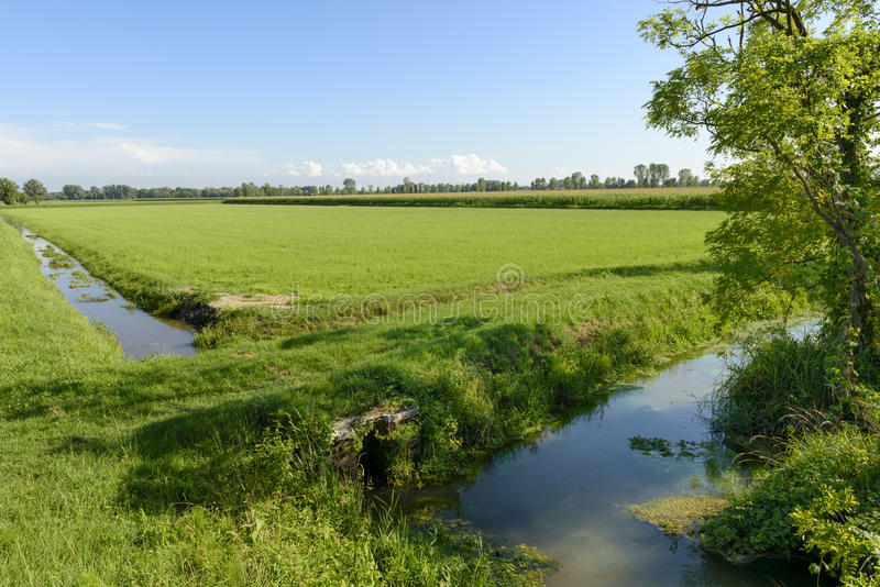 Przykopy i pola Adda park blisko Abbadia Cerreto zdjęcie stock