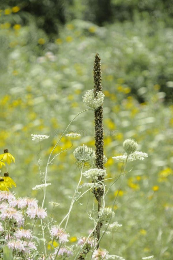Przykopy pełno Wildflowers obraz royalty free