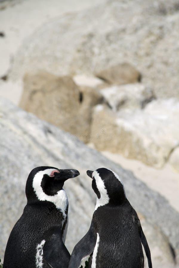 Download Przylądek Zagrażający Pingwiny Obraz Stock - Obraz złożonej z miasteczko, plaża: 13342505
