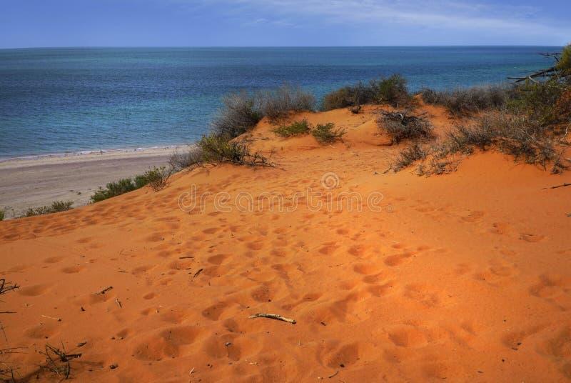 Przyl?dka Peronu park narodowy w zachodniej australii obraz royalty free