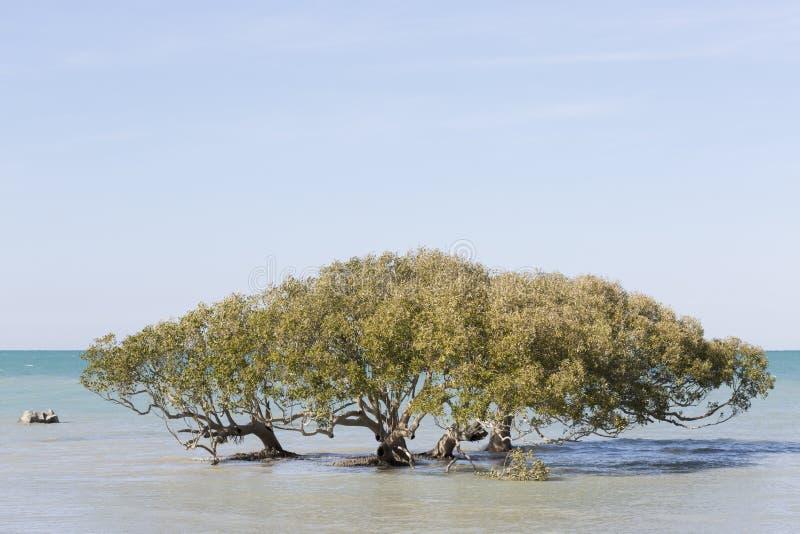 Przypływu mangrowe obrazy stock