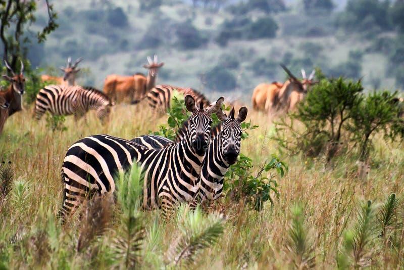 przyroda zdjęcie royalty free