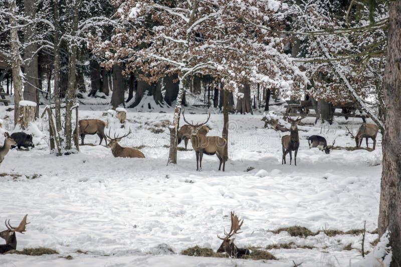 Download Przyroda zdjęcie stock. Obraz złożonej z sezon, natura - 28960542