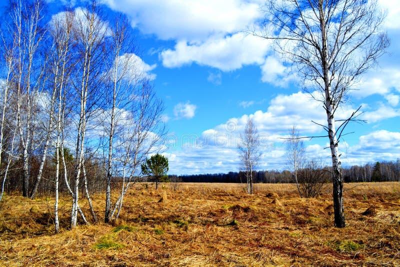 Przyroda Altaya zdjęcie royalty free