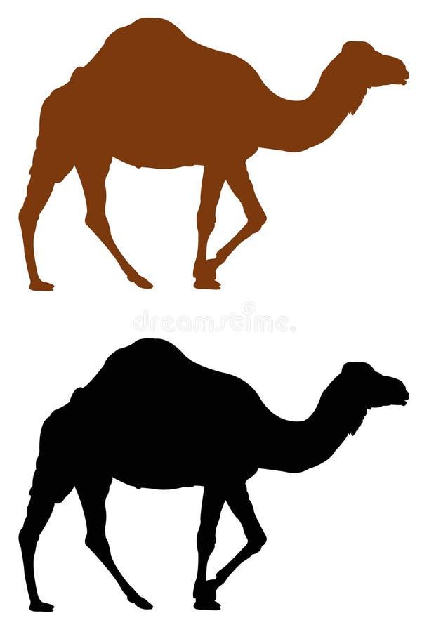 Przyroda safari zwierzę - wielbłądzia sylwetka ilustracja wektor