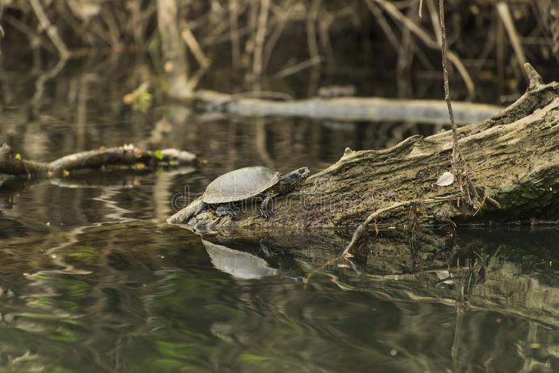 Przyroda w rzece obrazy stock
