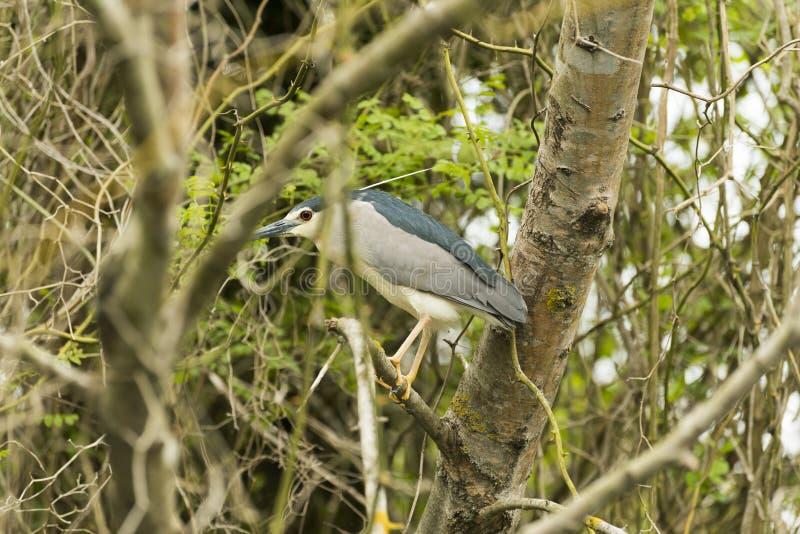 Przyroda w rzece zdjęcie stock