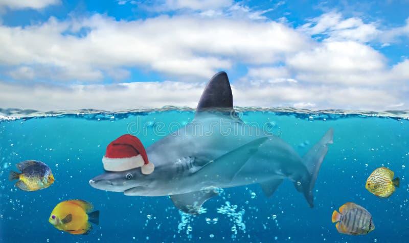 Przyrodnia podwodna fotografia tropikalny raj z grupą ryby i duży rekin z Święty Mikołaj kapeluszem ilustracji