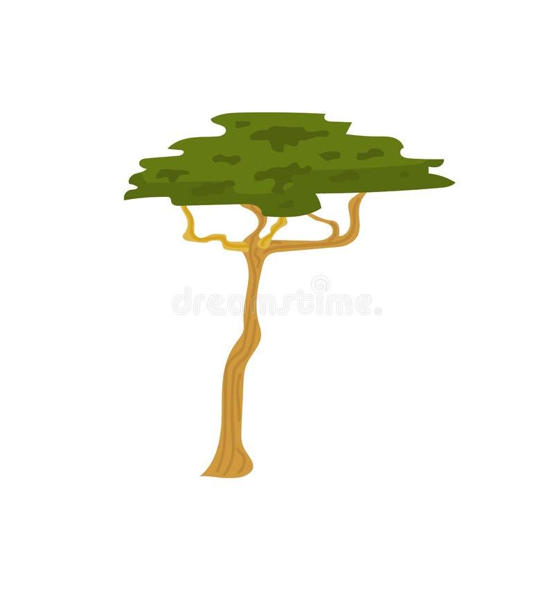 Przyrody roślina, Sawannowy drzewo, Afrykański flora wektor ilustracji