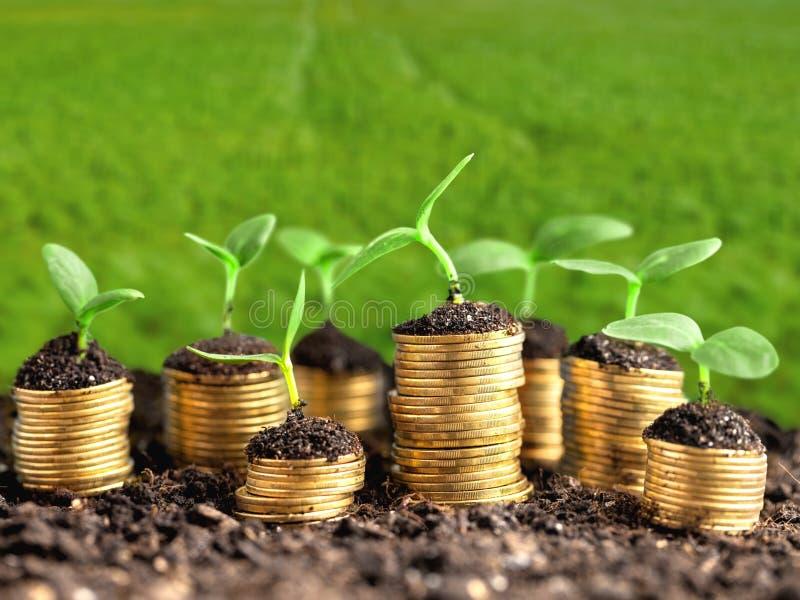 Przyrost, zieleń, biznes zdjęcia royalty free