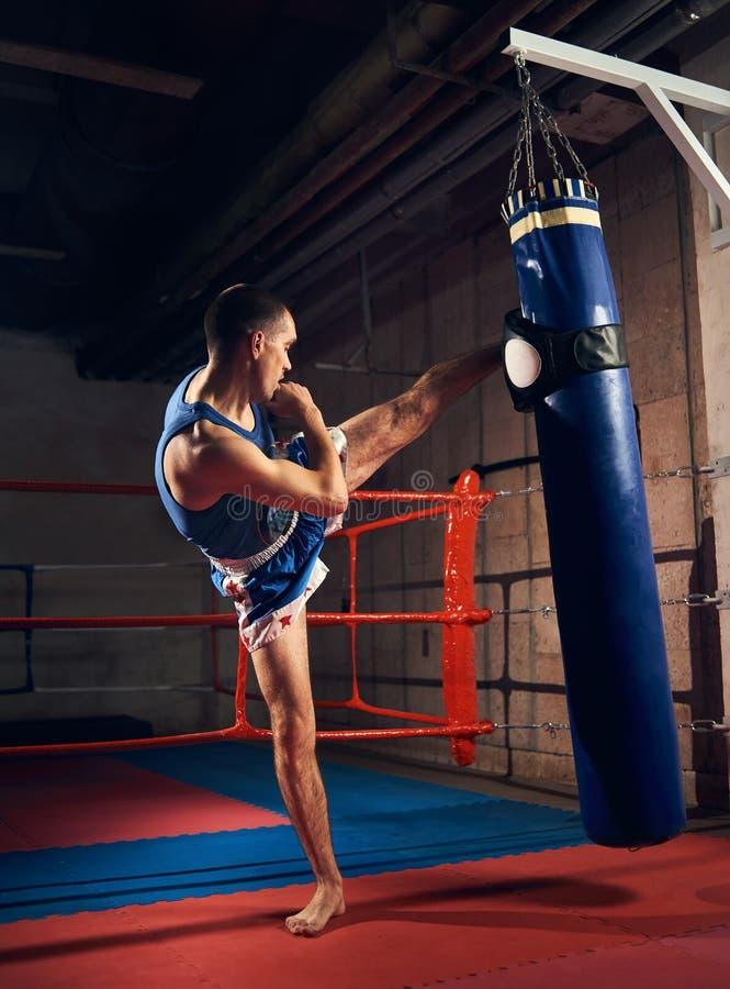 Przystojnego kopnięcie boksera stażowy kopanie i uderzać pięścią bokserską torbę obrazy stock