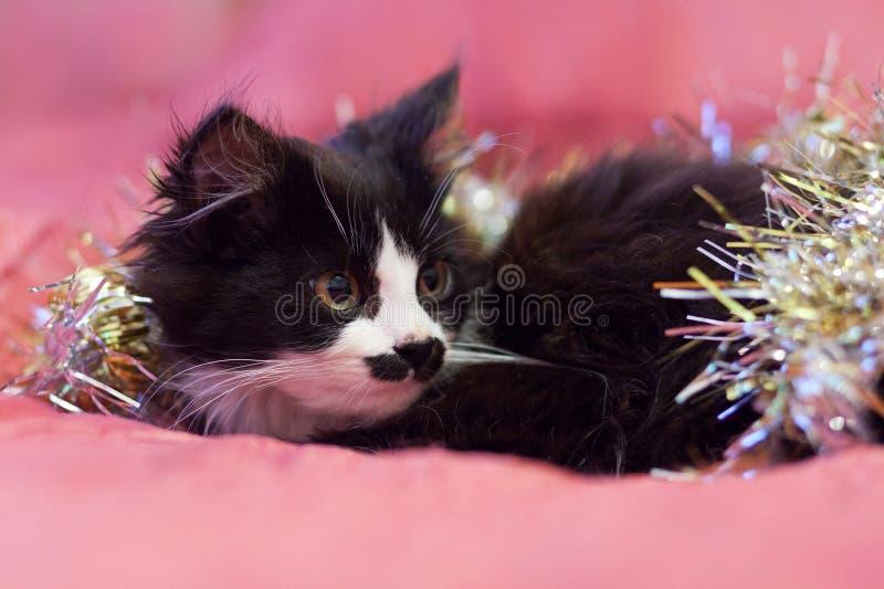 Przystojny czarny i biały kot zakrywający w srebnym świecidełku - Bożenarodzeniowa kiciunia Różowy tło obrazy stock