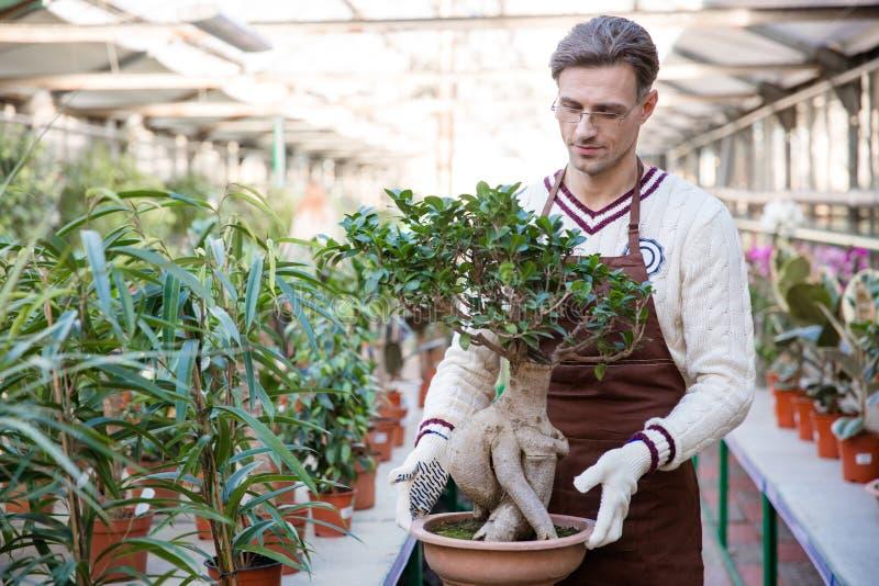 Przystojny mężczyzna ogrodniczki mienia bonsai drzewo w garnku zdjęcia stock