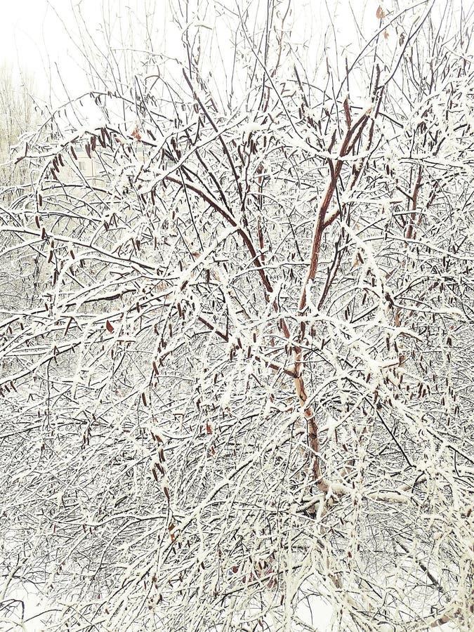 przyszła zima Drzewa zakrywają z śniegiem Zimy ofensywa fotografia royalty free