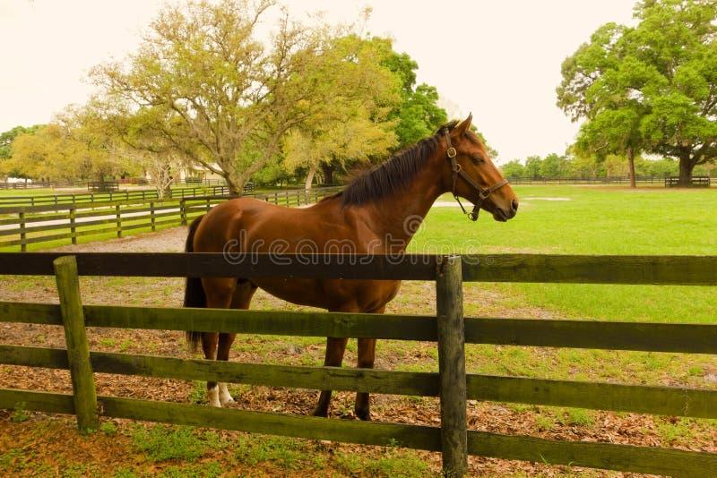 Przyszłościowy biegowy koń przy stażowy facilty jeżeli Florida zdjęcie royalty free