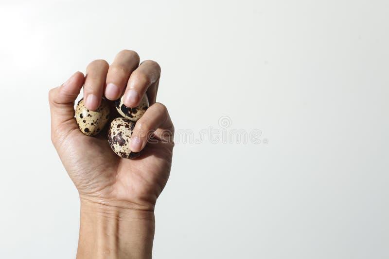 Przytulona przepiórka Mały ptak dziecka w jego rękach obraz royalty free