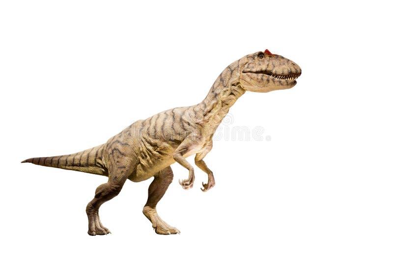 Przywrócenie alosaura dinosaur odizolowywający. (alosaur fragilis) obrazy royalty free