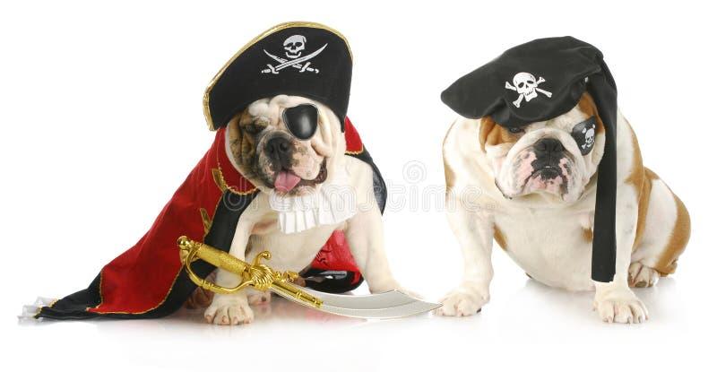 Psów piraci zdjęcie royalty free