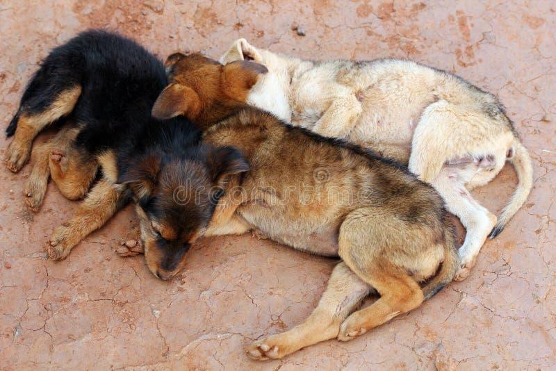 psów target3429_0_ sypialni ulicy wpólnie potomstwa fotografia stock