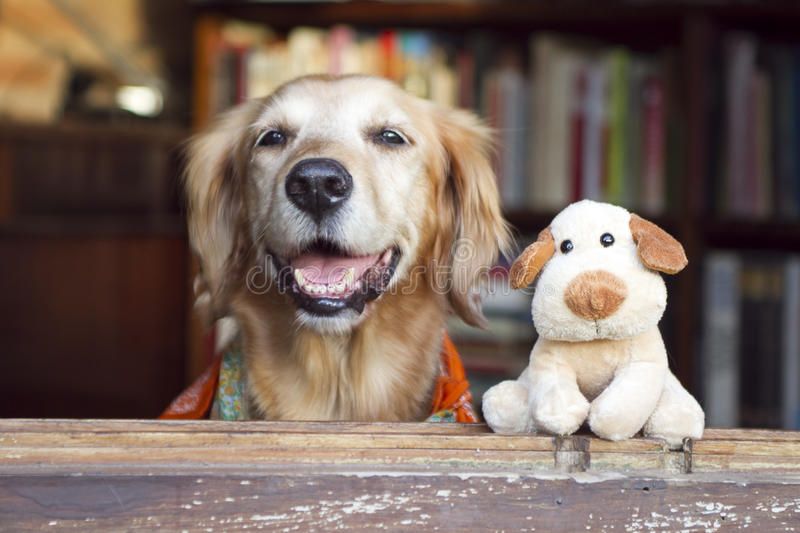 Psa i przyjaciela psa zabawka