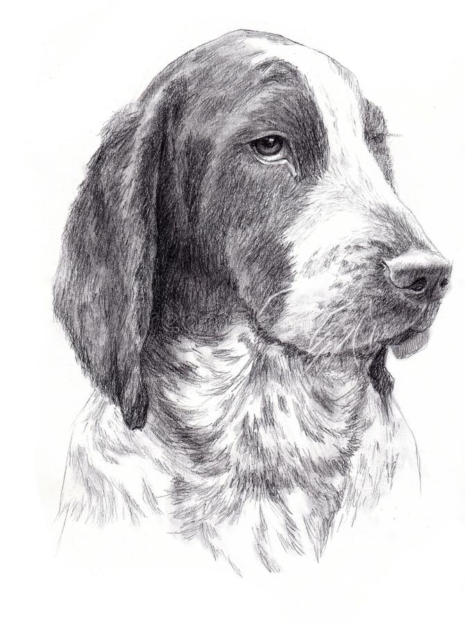 Psa portret ilustracji