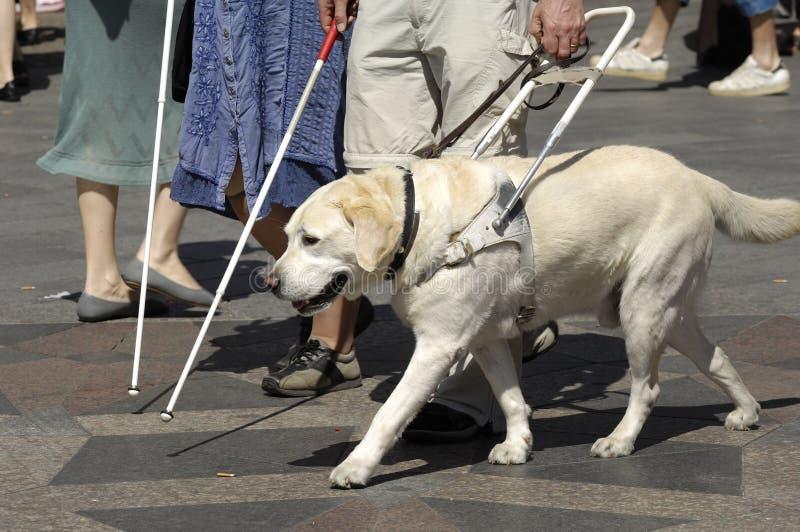 psa przewodnika obrazy stock