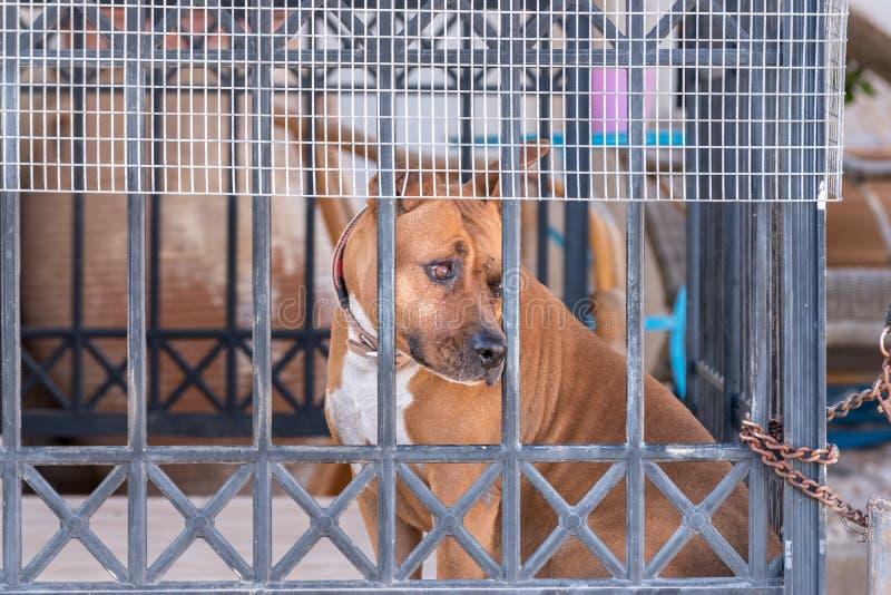 psa za płotem obraz royalty free
