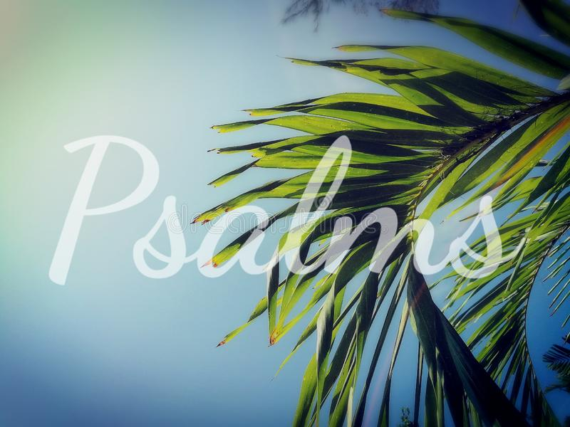 Psalms and green coconut palm fronds in the background. Psalms, one of a book in the Bible.  Concept about Christianity, Christ Jesus, the Lord God and His words stock photo
