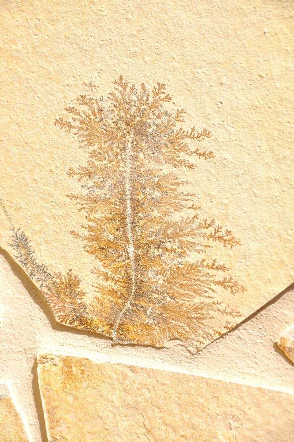 Pseudofossil στοκ φωτογραφίες με δικαίωμα ελεύθερης χρήσης