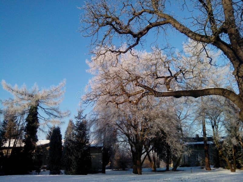 Pshemysl, Польша Взгляд зимы Beautyful в парке Lubomirskich стоковое фото