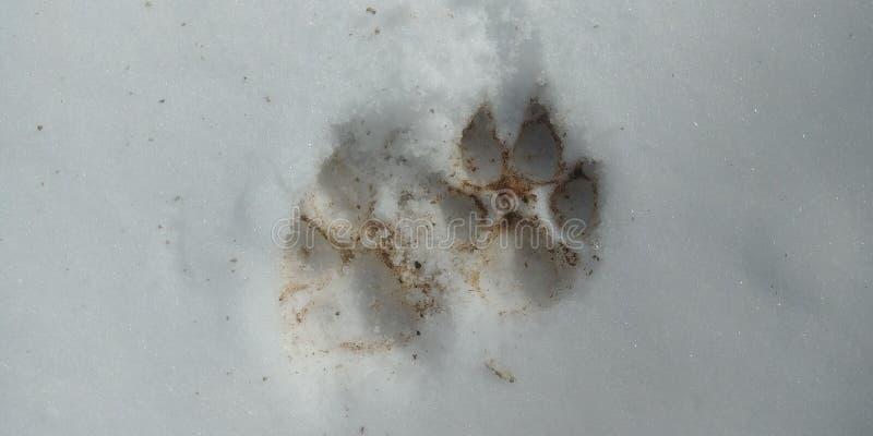 Psi łapa druki w śniegu zdjęcia stock