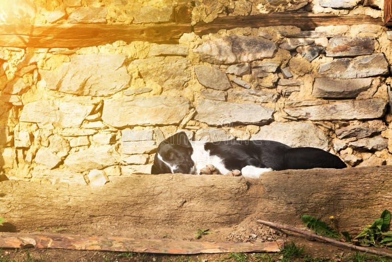 Psi łgarski dosypianie na kamiennym tarasie w słońcu obrazy stock