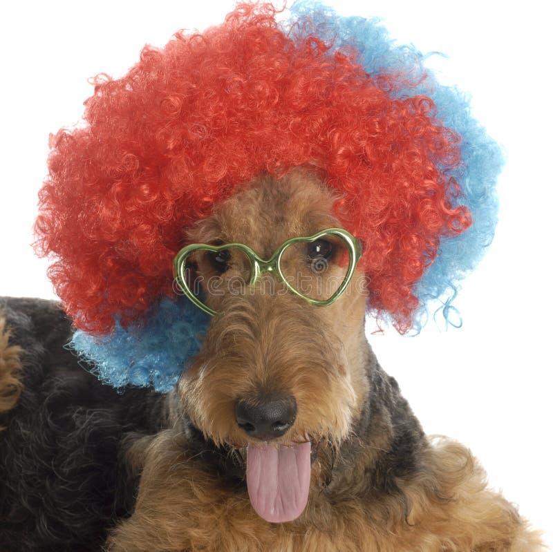 psi śmieszny zdjęcia royalty free