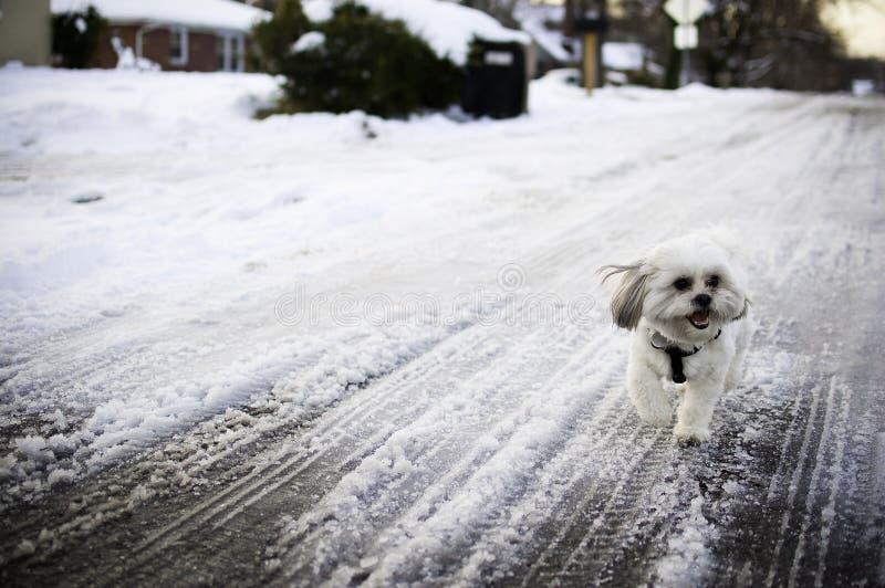psi śnieg obraz stock